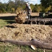 Bamboo Mulch