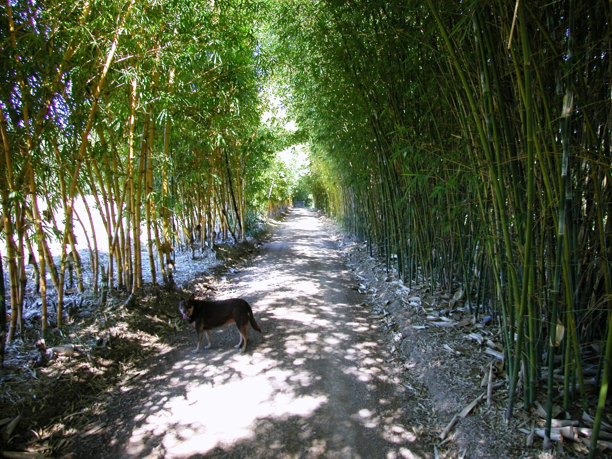 Excellent Landscaping with Bamboo Plants 2560 x 1920 · 1618 kB · jpeg
